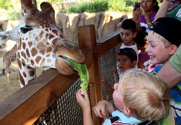 Летом можно выбрать другое место, Чтобы отметить день рождения, например, цирк или зоопарк.